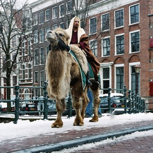 Camels in Amsterdam -- Photo by Börkur Sigurbjörnsson